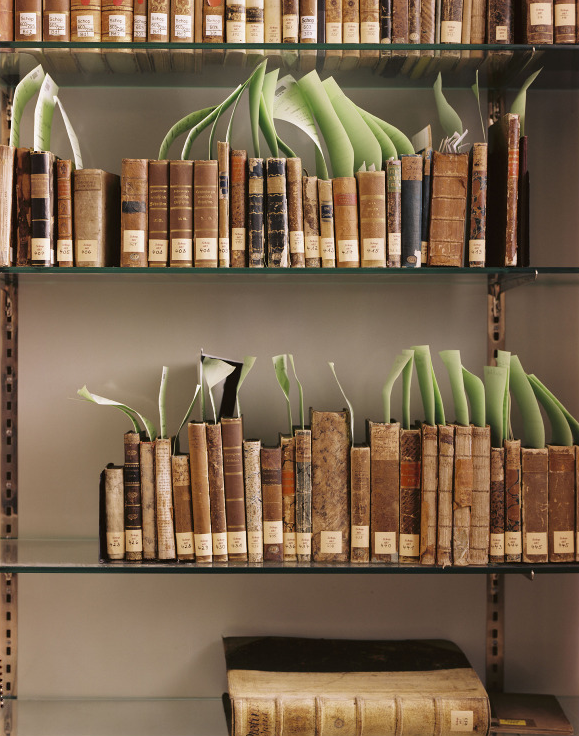 Arthur Schopenhaer's book collection. Photograph: Patrick Lakey.
