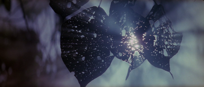 A still from Terrence Malick's The Thin Red Line (1999)