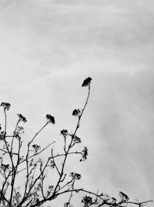 Photograph: Rhys Tranter